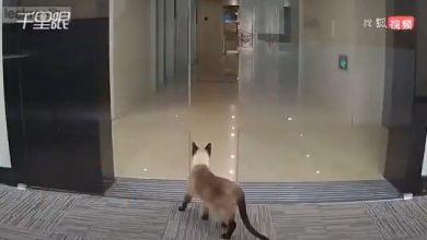 شاهد: قطة كادت أن تموت بسبب فضولها - صحيفة هتون الدولية