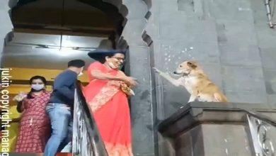 شاهد: كلب يصافح مرتادي المعبد - صحيفة هتون الدولية