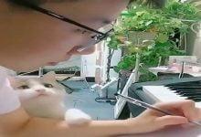 قطة أرادت شيئا من الاهتمام وهكذا عبرت - صحيفة هتون الدولية