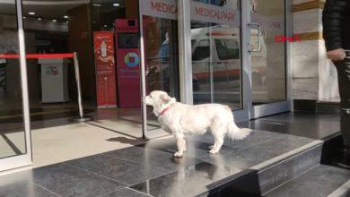 شاهد: كلب يزور صاحبه المريض يوميا - صحيفة هتون الدولية
