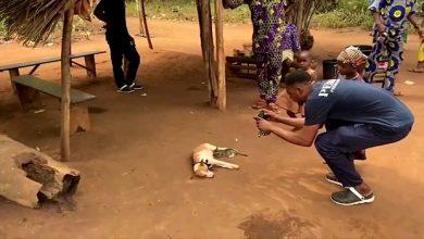شاهد: قطة صغيرة تتغذى على حليب كلب - صحيفة هتون الدولية