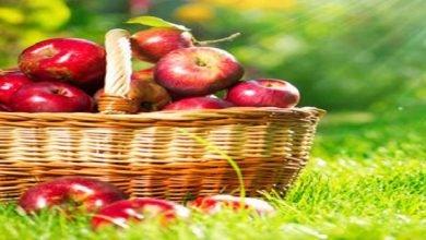 فوائد التفاح لجسمك عظيمة -صحيفة هتون الدولية