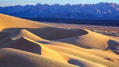 ما هي البيئة الصحراوية - صحيفة هتون الدولية