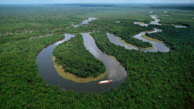 ما أهمية غابات الأمازون؟ صحيفة هتون الدولية