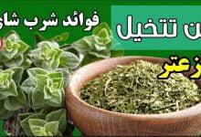 فوائد شاي الزعتر لصحة الجسم -صحيفة هتون الدولية-